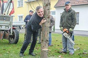 Kirtagbaum der Ratschen Buam, 11.11.2016